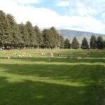 Fillmore Cemetery 3